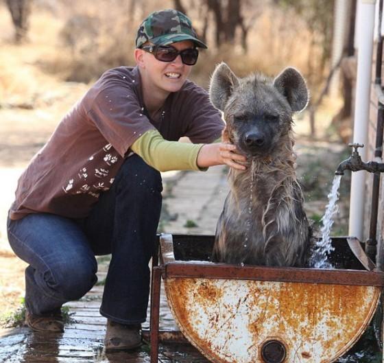 友鑫宠物托运为大家介绍下凶猛的土狼可爱的一面